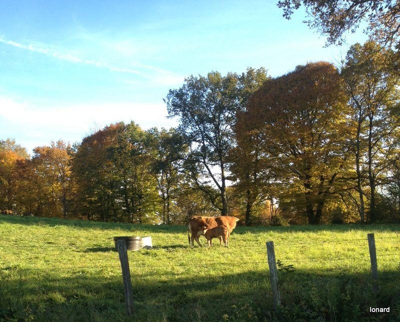 Un bel automne!