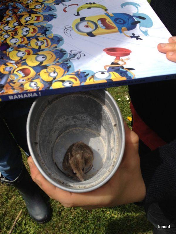 Il faut sauver la souris Camille!