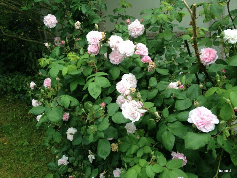 Et des roses....
