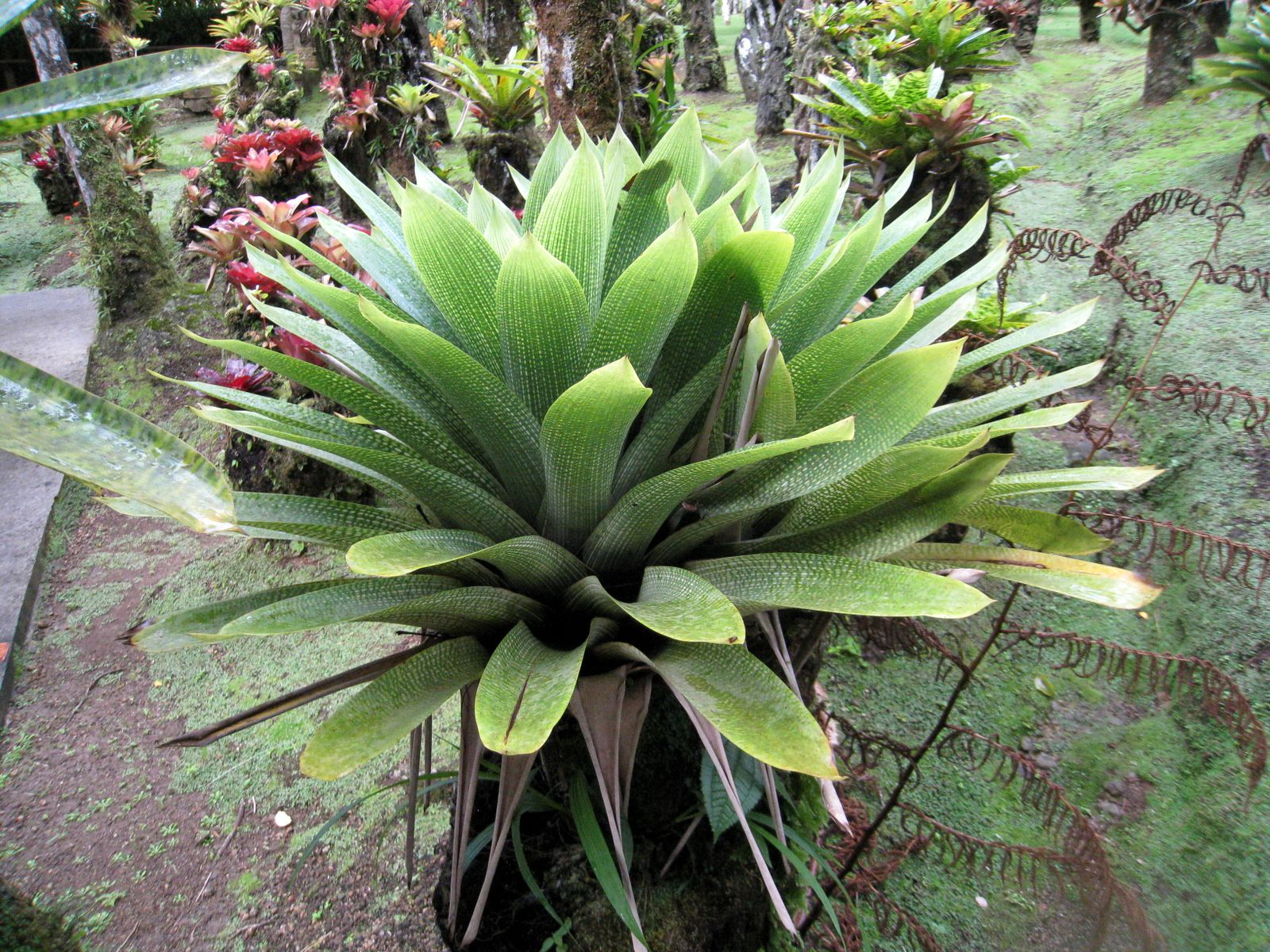 Ces plantes ne sont pas identifiées dans le jardin et cette remarque s'applique pour bien d'autres  ...