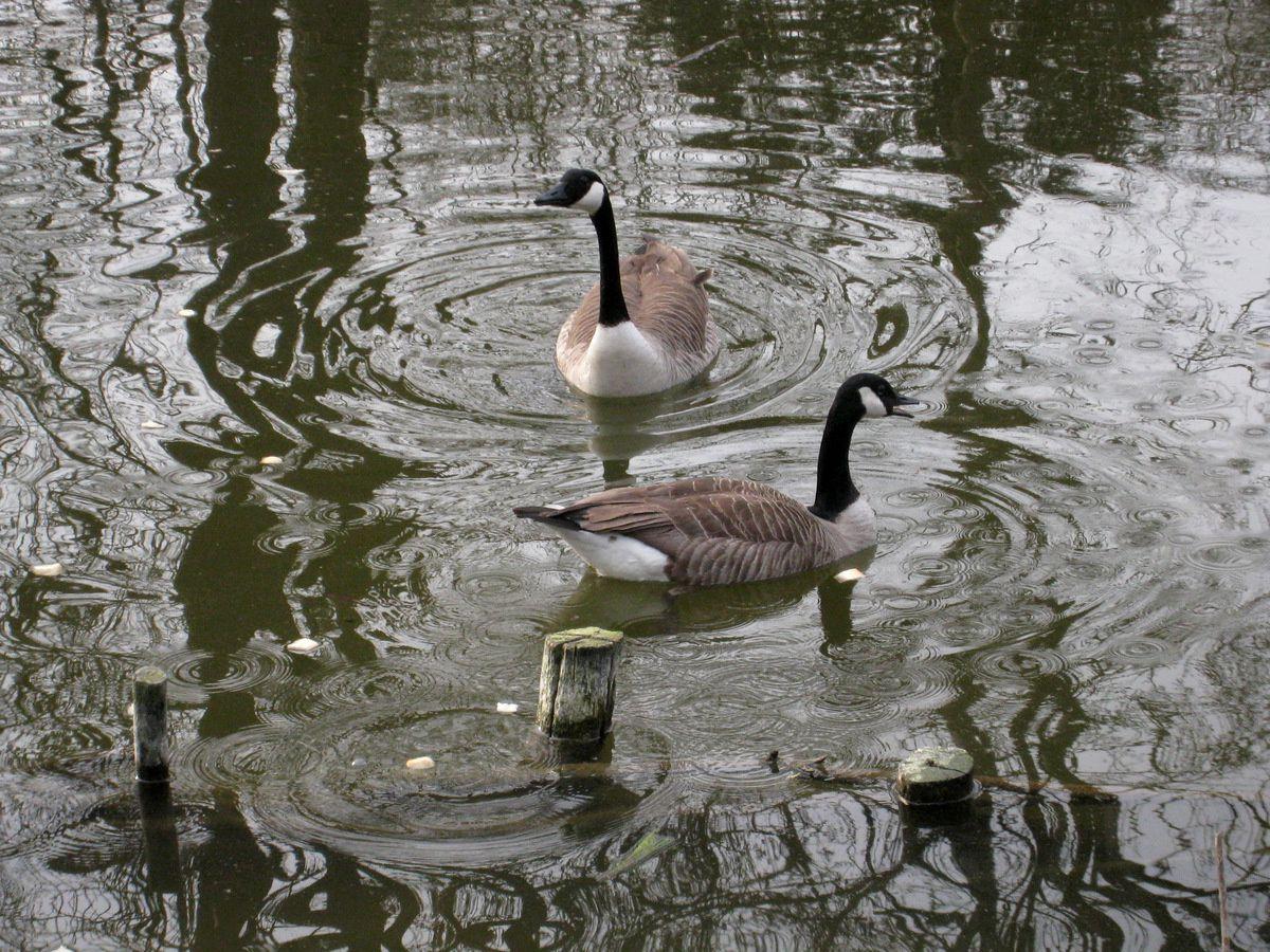 Le totem au canard, parc de Grouchy à Osny