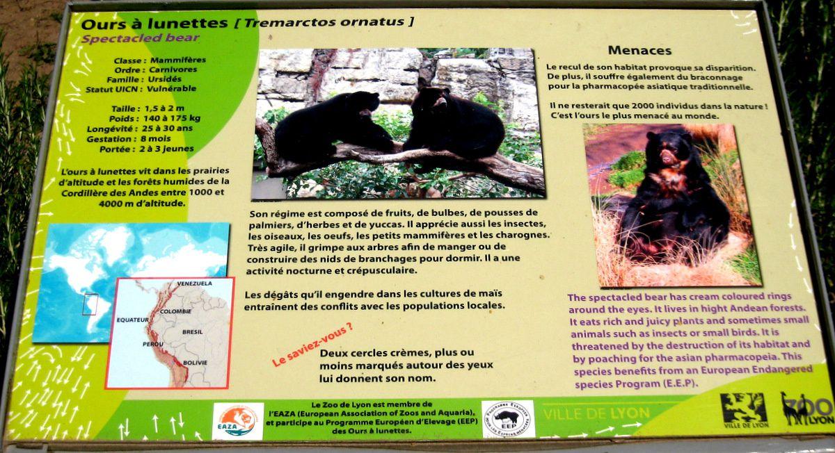 Ours à lunettes, parc de la Tête d'Or