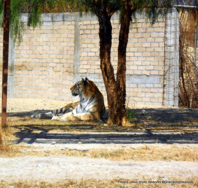 Oaxaca, oro zapoteco : Jaguar Xoo