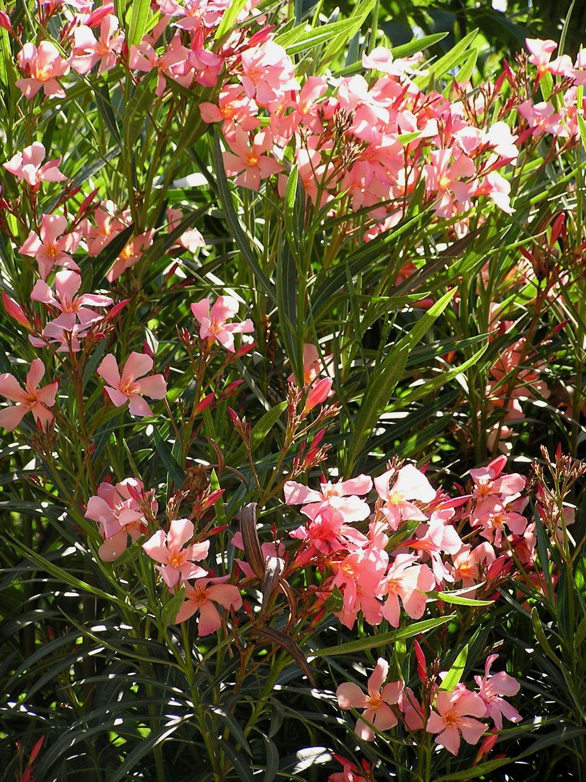 Rêve de jardin & Jardin de Rêve