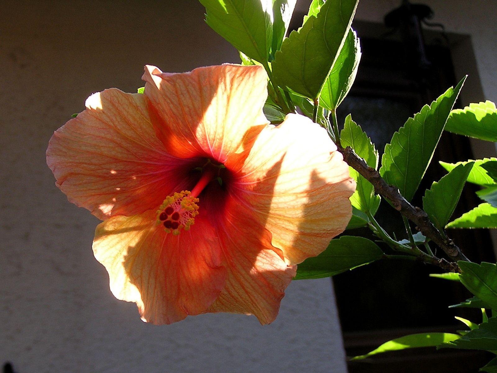 Florinlove : V1 Passion tropicale
