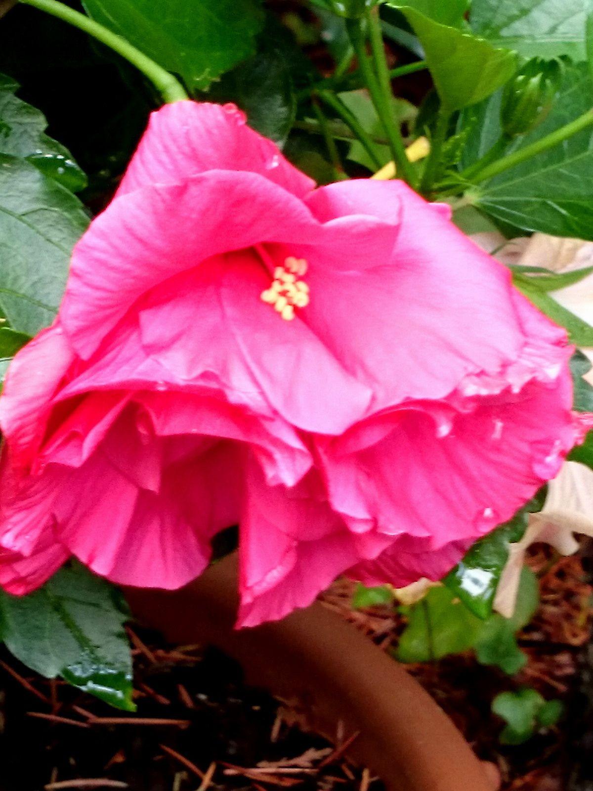 Le poid de la fleur lui donne ce petit air penché
