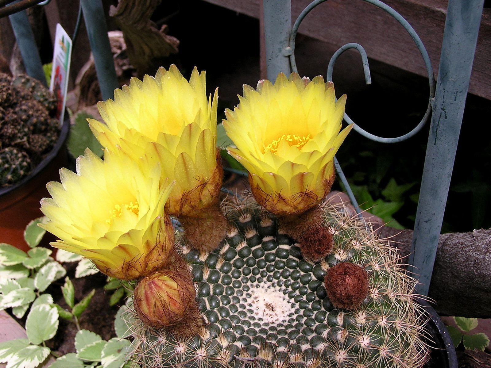 Cactées et Succulentes