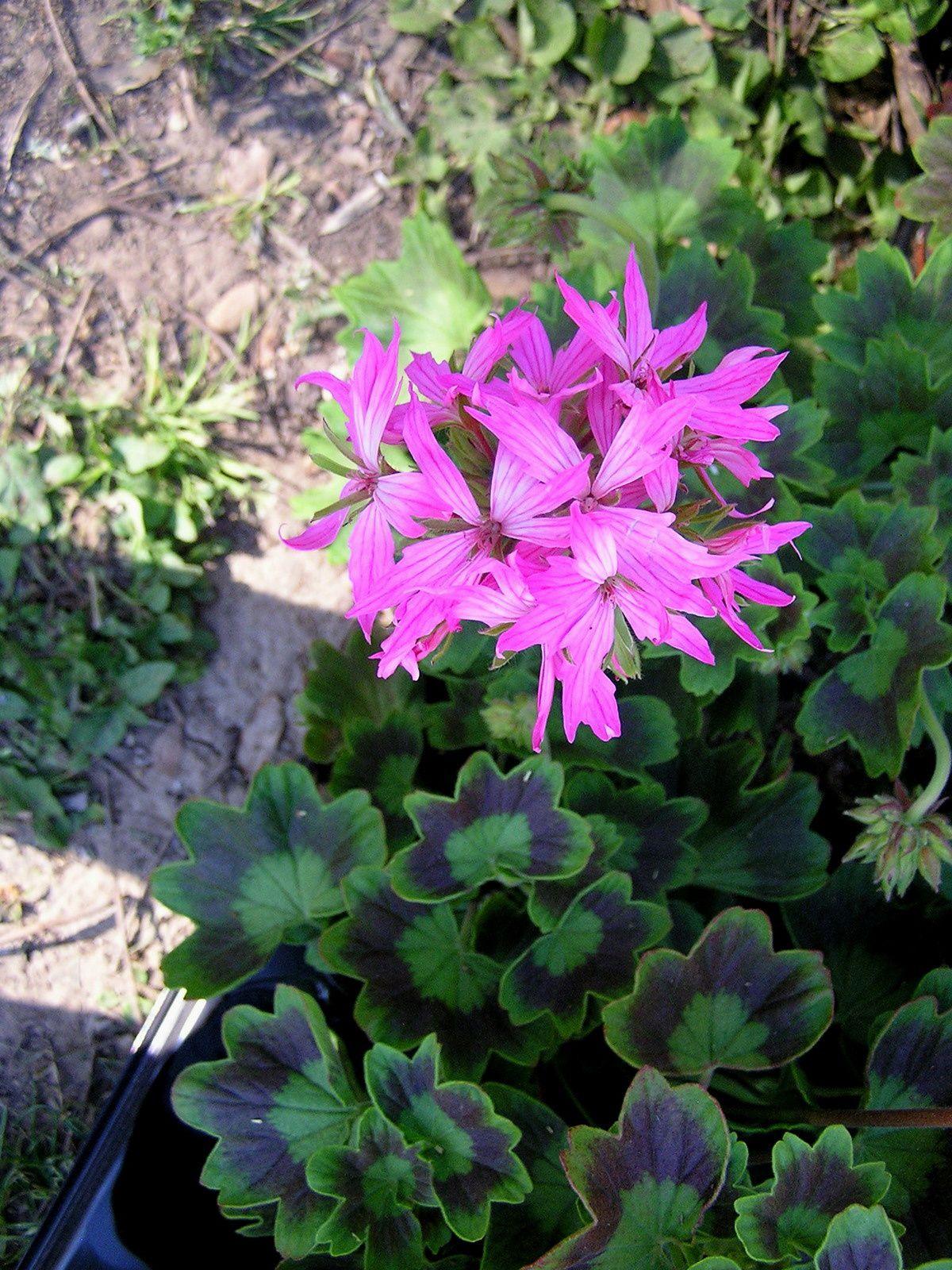 4 saisons au jardin le printemps 2015