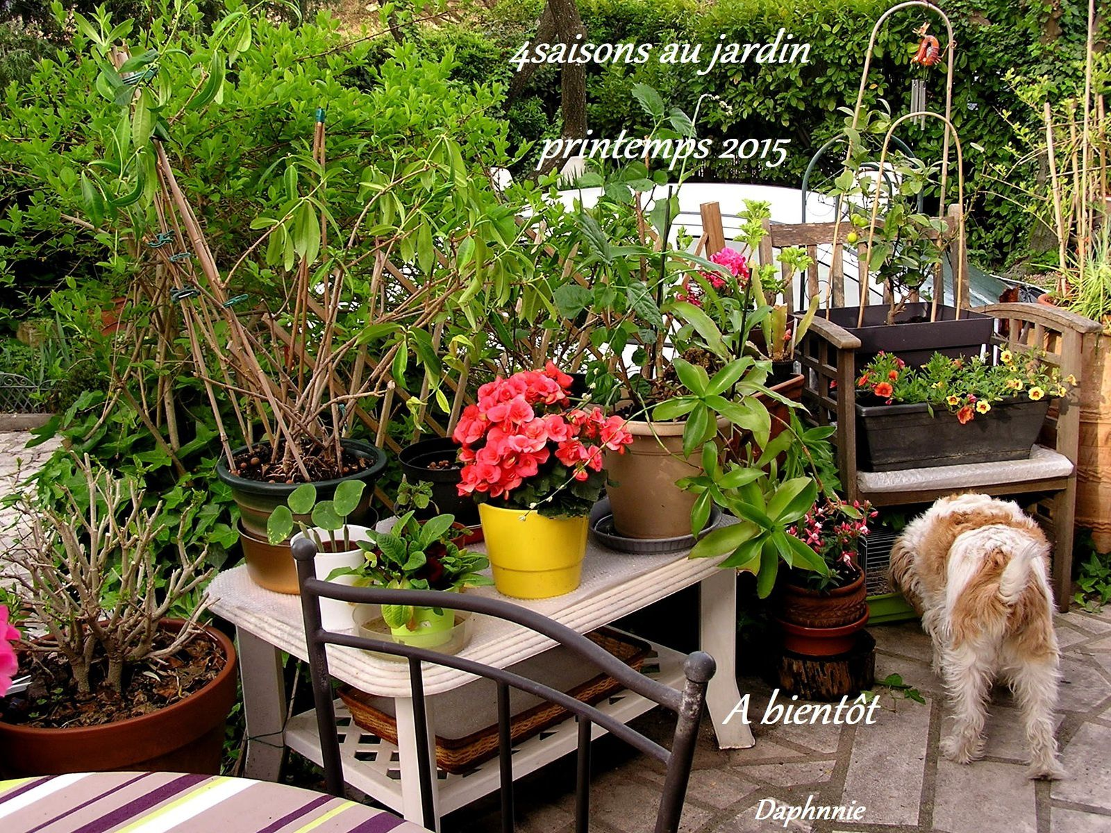 4 saions au jardin printemps 2015 orchidium vaunage