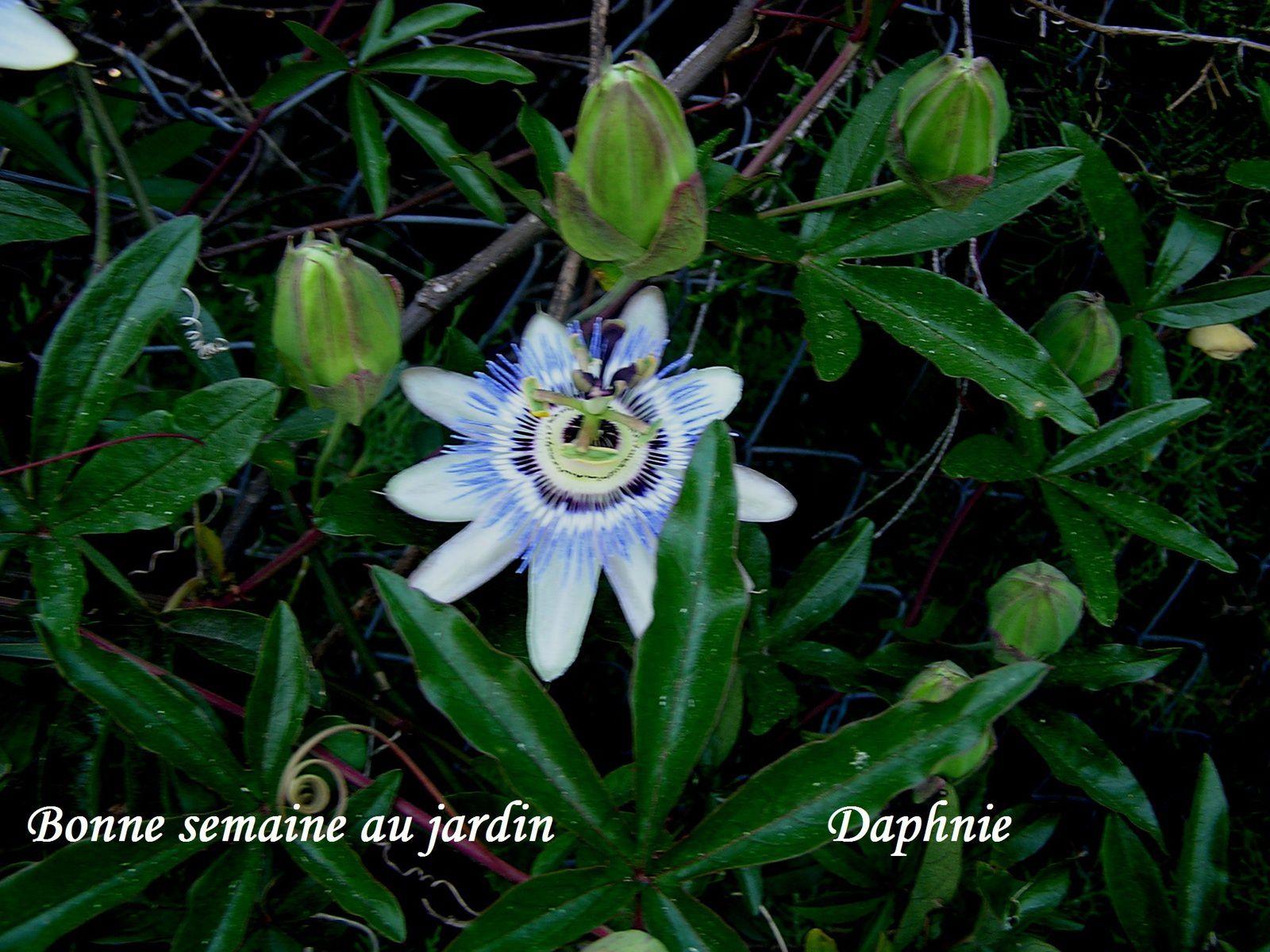 4 saisons au jardin : printemps 2015