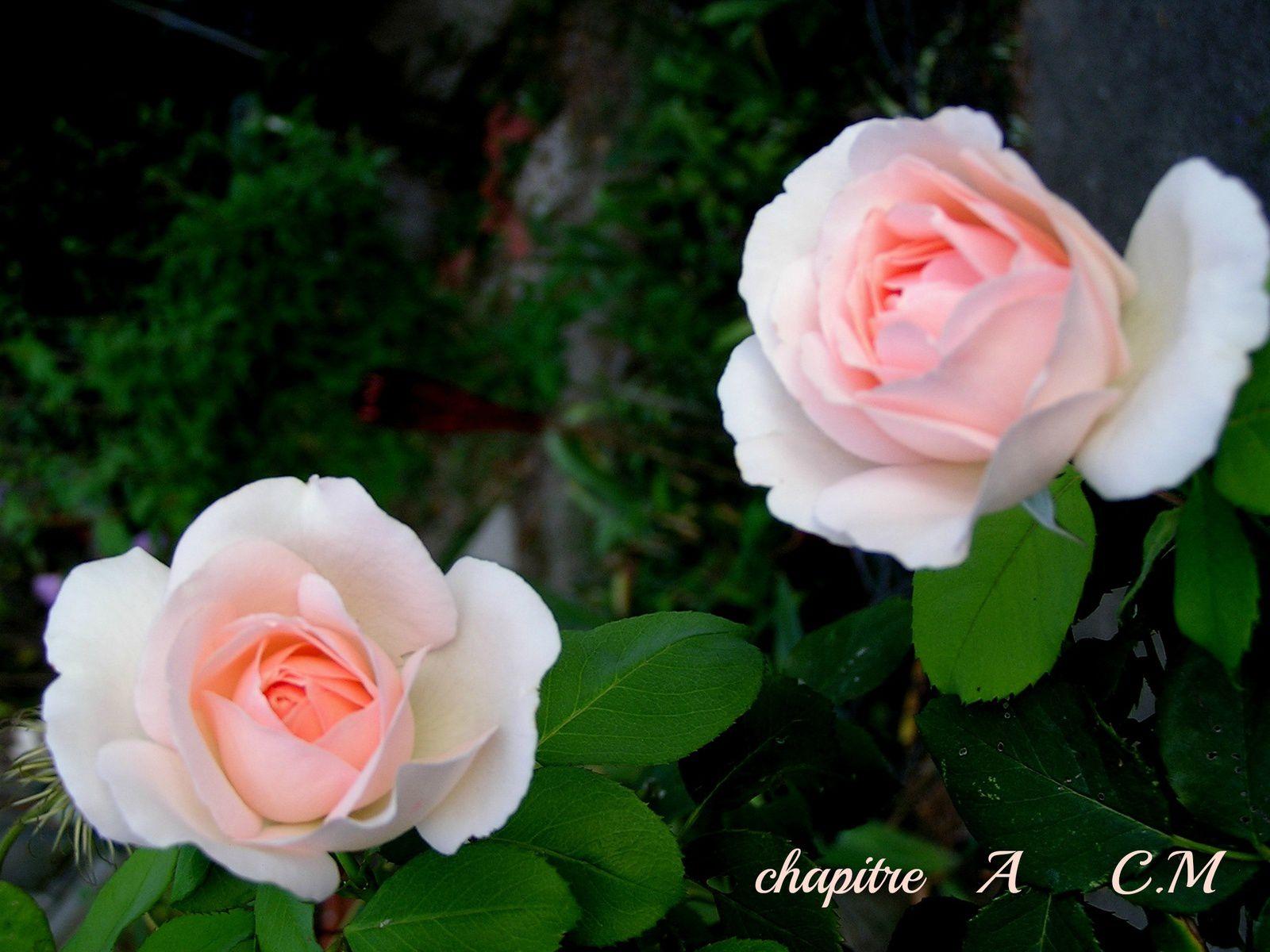 Rendez-vous au jardin de mon cœur