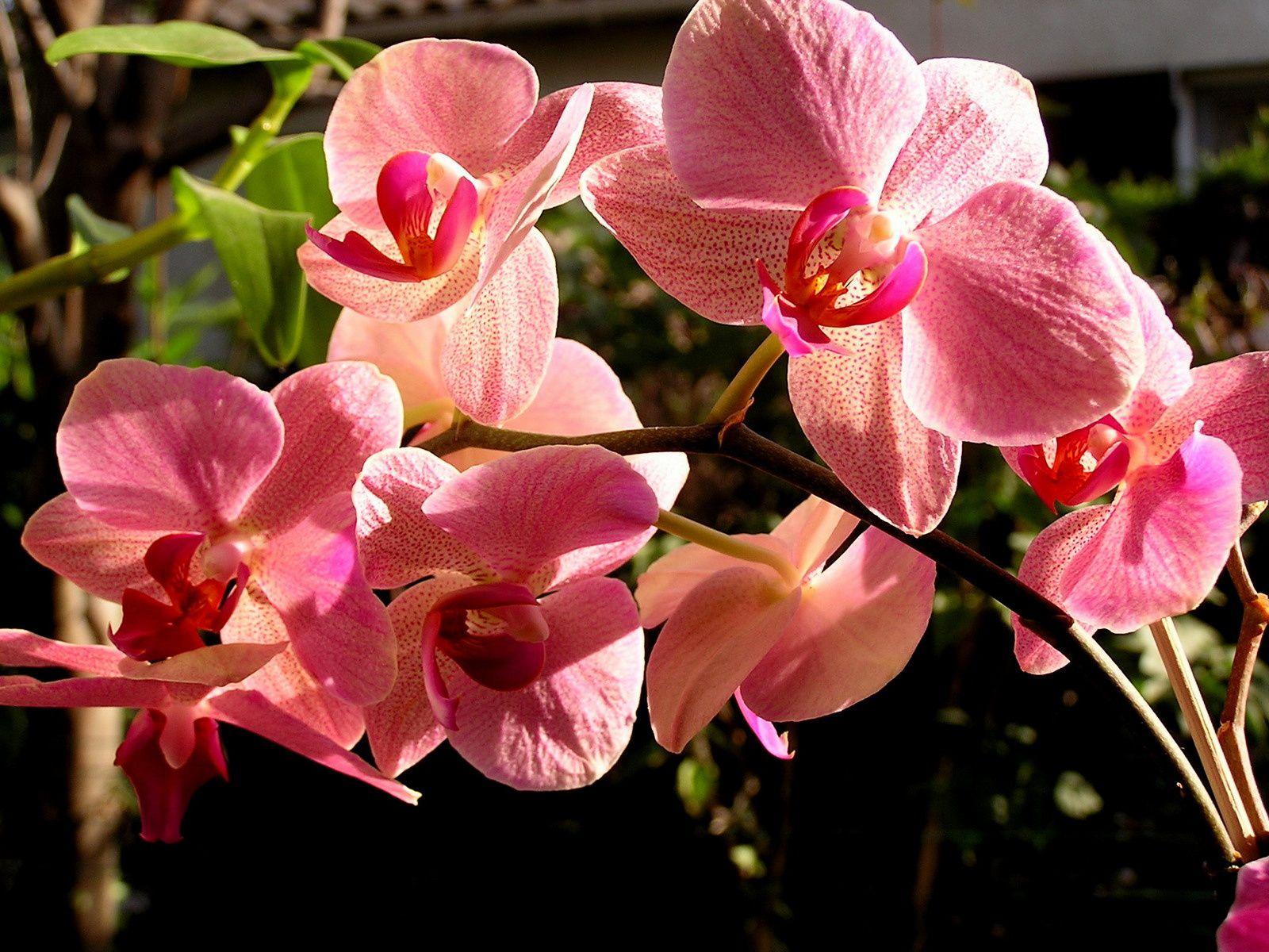 S O S  : Orchidée en détresse