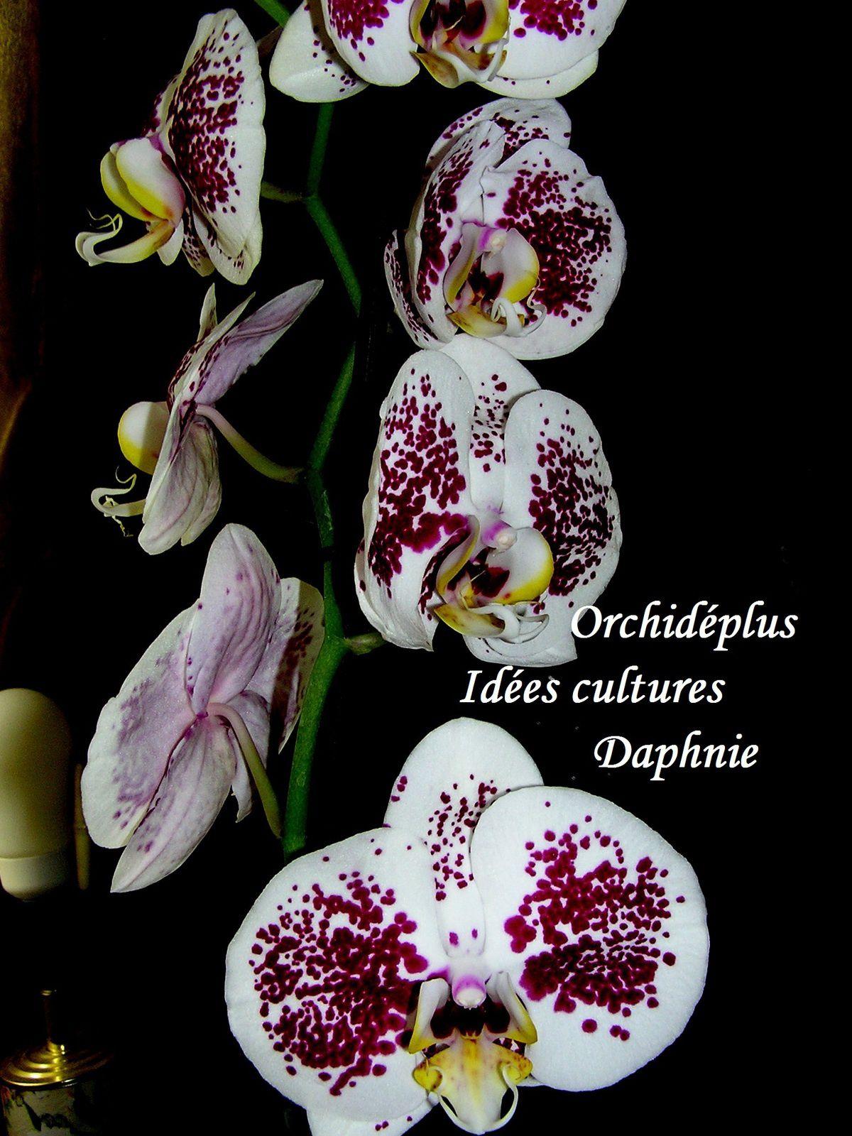 les exigences des orchidées