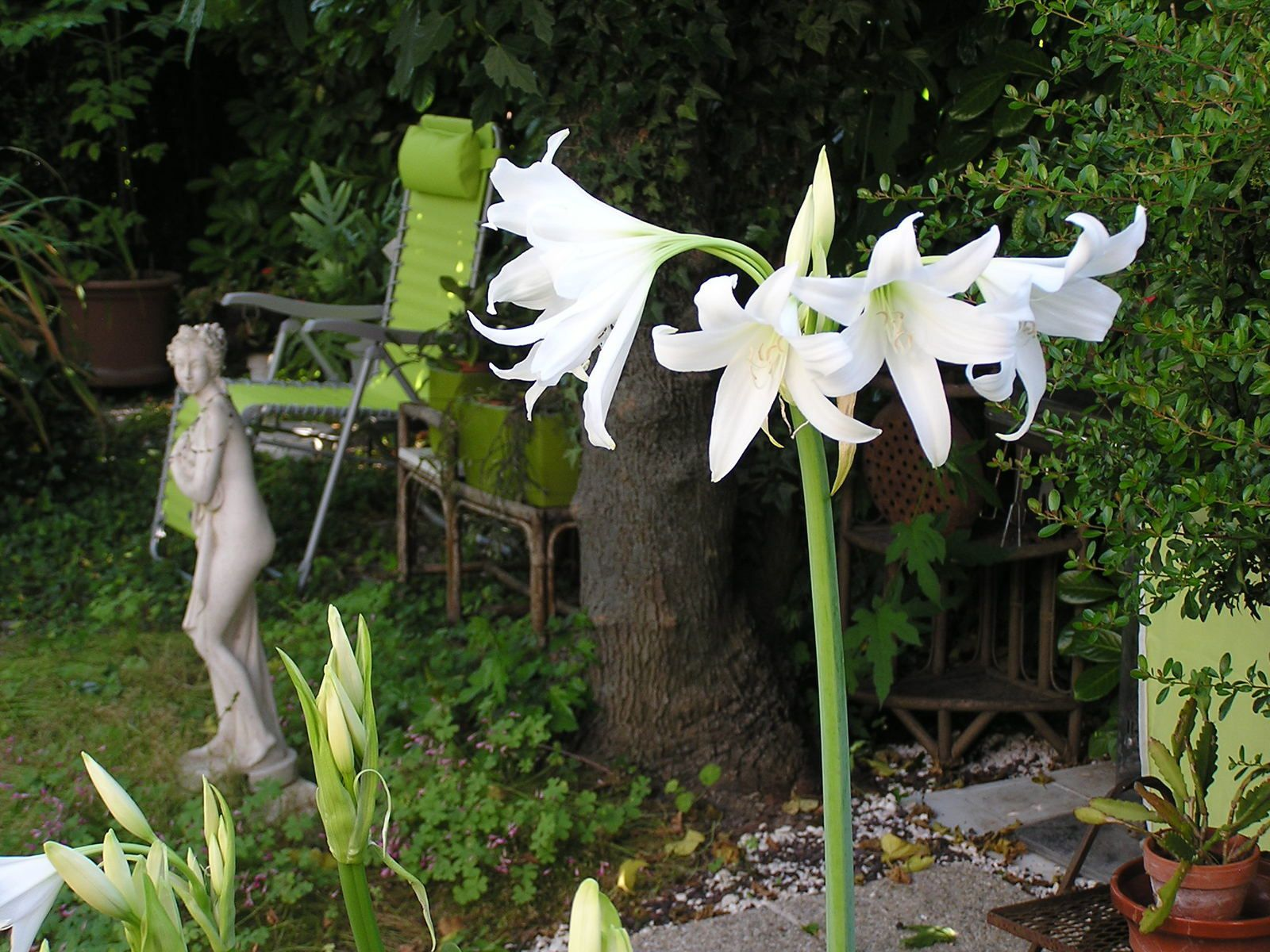 Un jardin en Vaunage