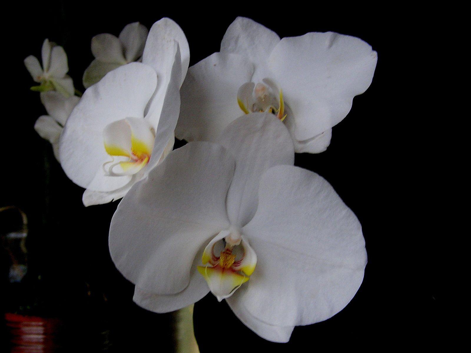 Les orchidées sont inscrites dans une passion sans cesse grandissante et j'aime la partager avec vous