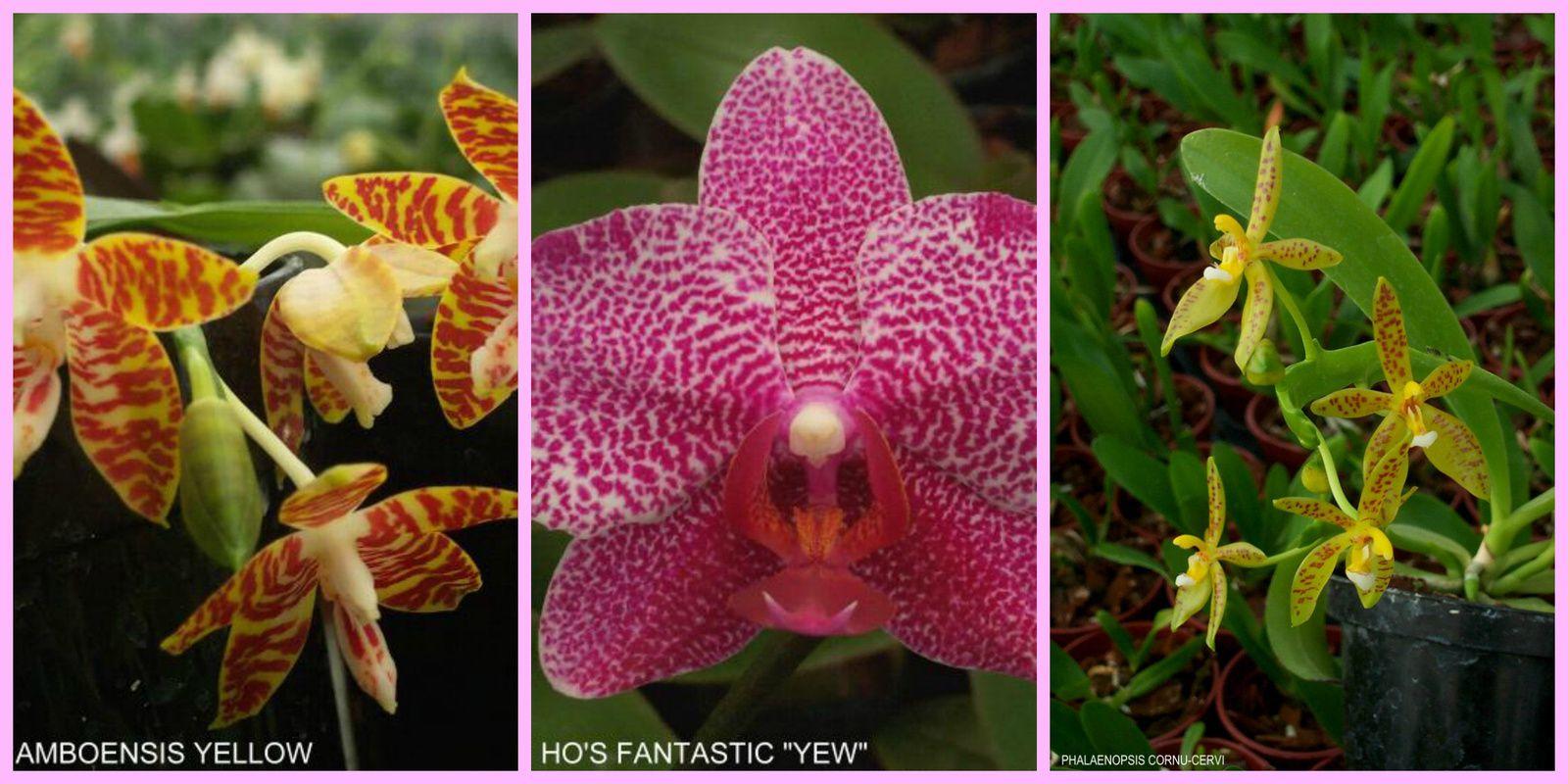 Savoir soigner une orchidée: la fertilisation