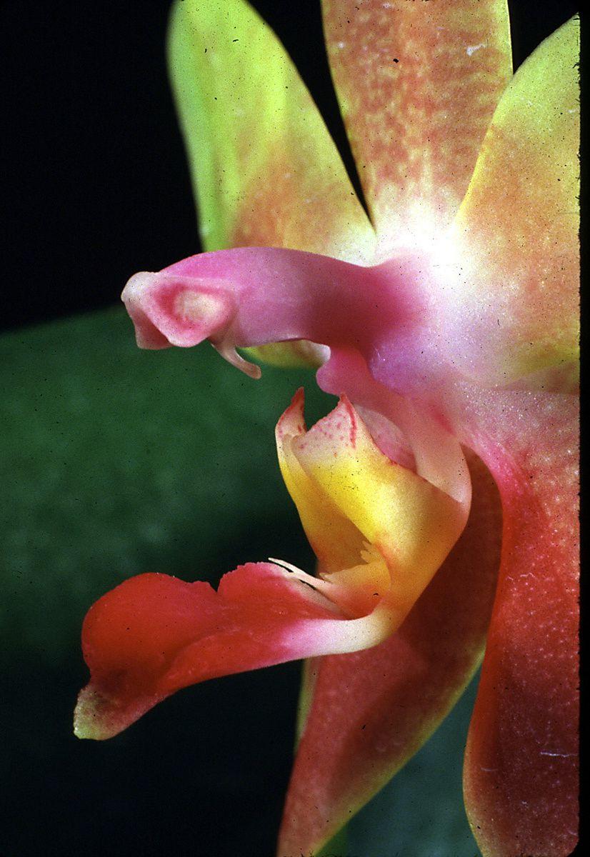Savoir : déshabiller une orchidée
