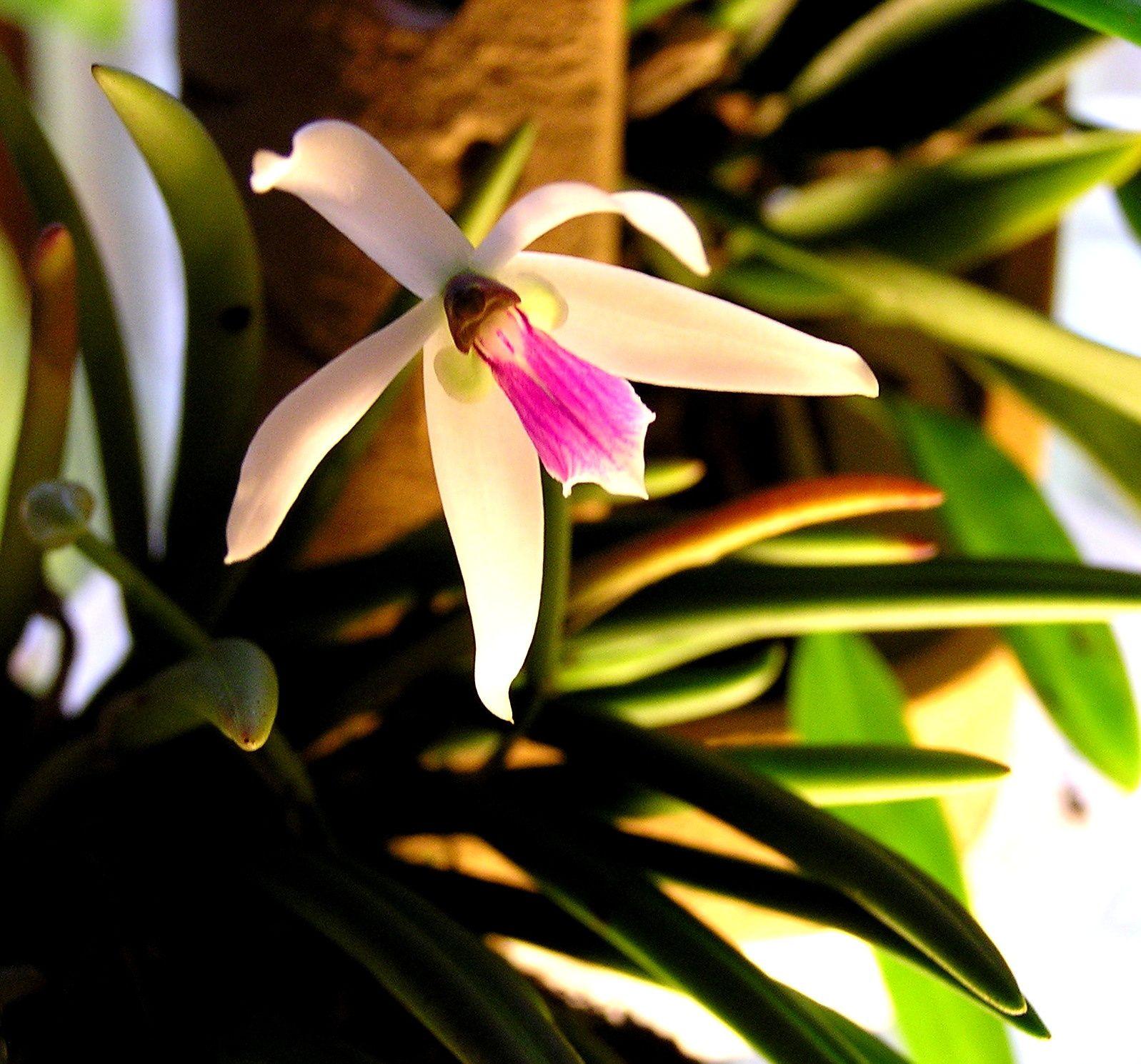 Ma vie en Orchidées : Floraison décembre 2009