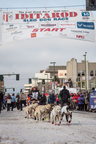My team, Iditarod 2015, ceremonial start. Photo Jeff Schultz.
