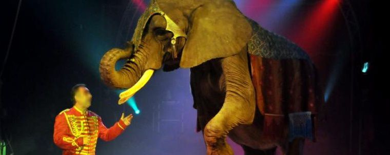 Reportage de France 5 sur les cirques (extraits)