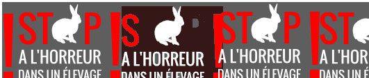 Horreur dans un élevage à lapins