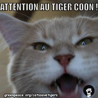 Les chats sauvent les tigres