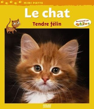 Le chat tendre félin