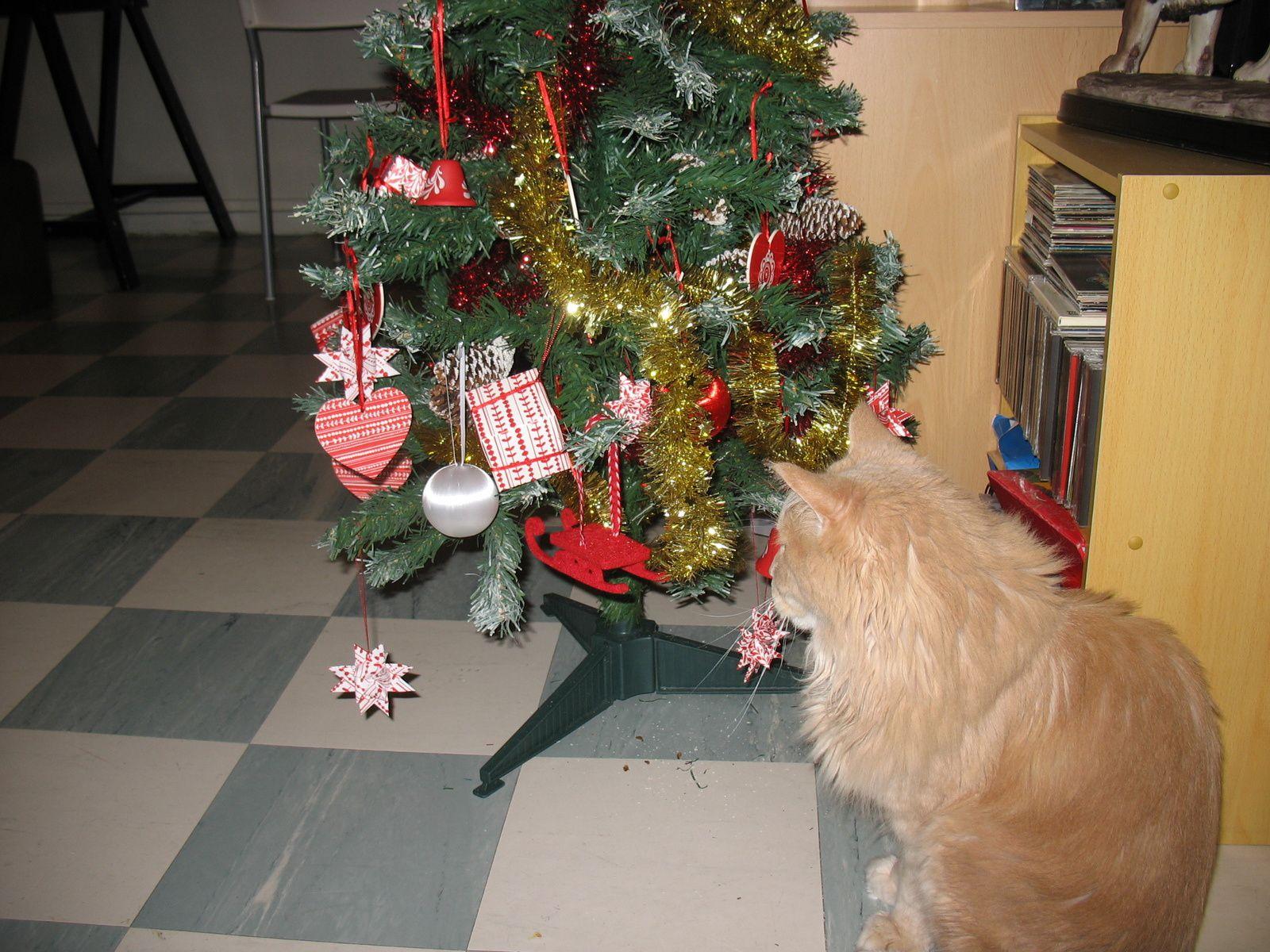 Bibi et le sapin de Noël 2014