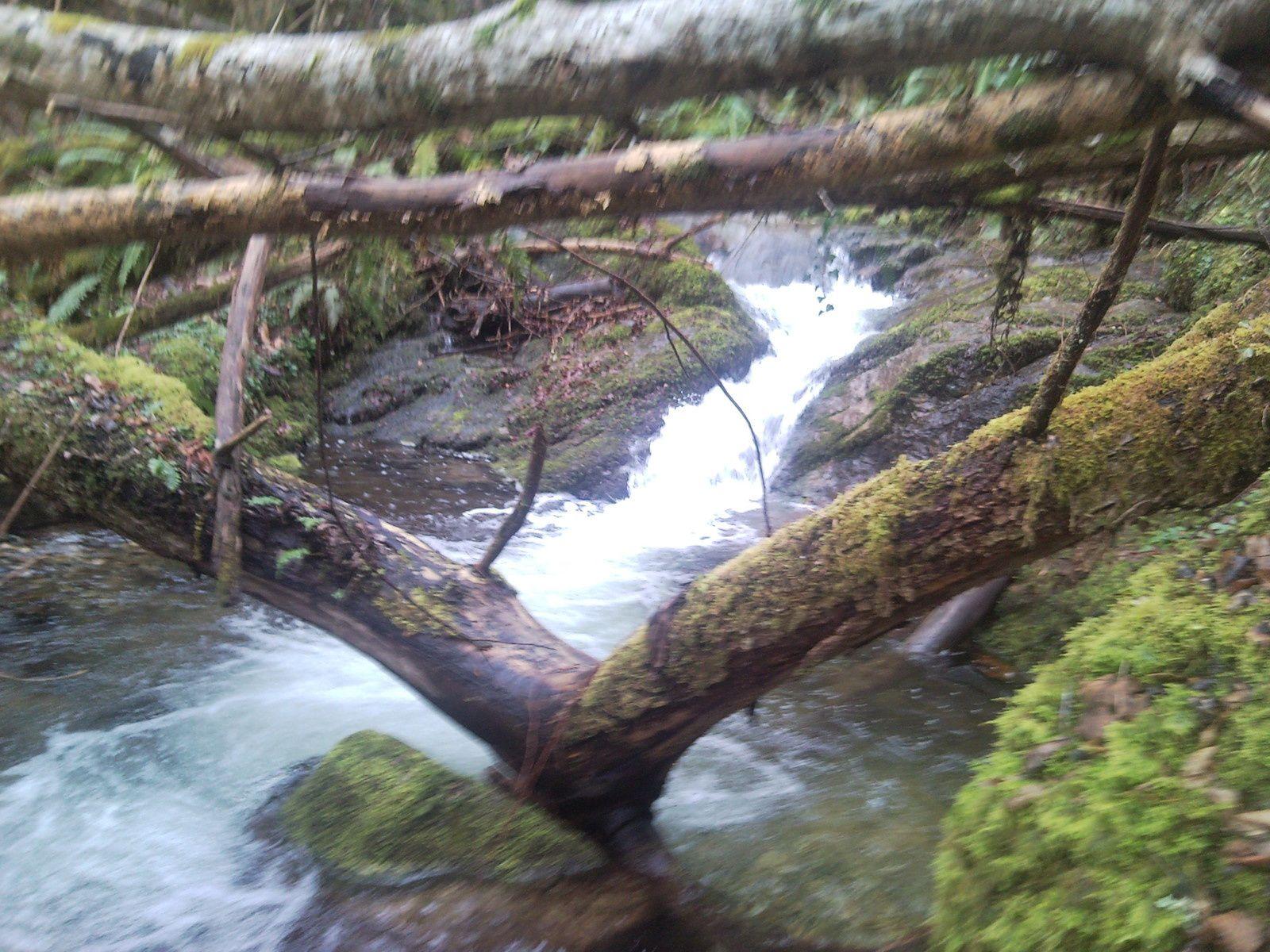 C'est à partir de cet endroit que le Rossignol prend tout son charme d'une part par la beauté du ruisseau, et de ses truites, c'est une petite rando pêche fort intéressante à faire. Je n'ai jamais été déçu sur ce secteur et la couleur noir des truites et un véritable bonheur