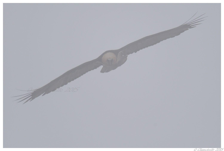 un jour dans la brume