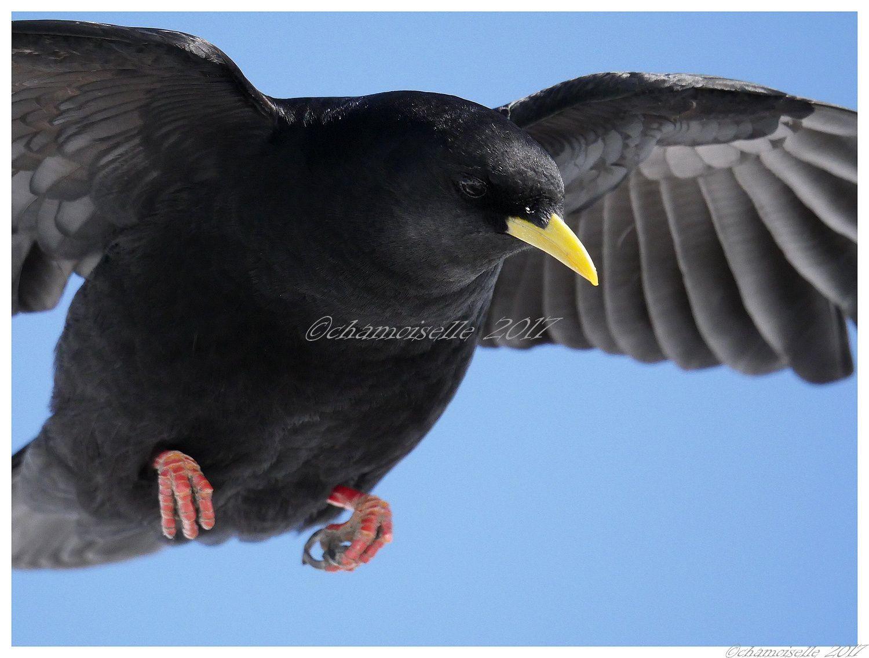 petites et grandes plumes