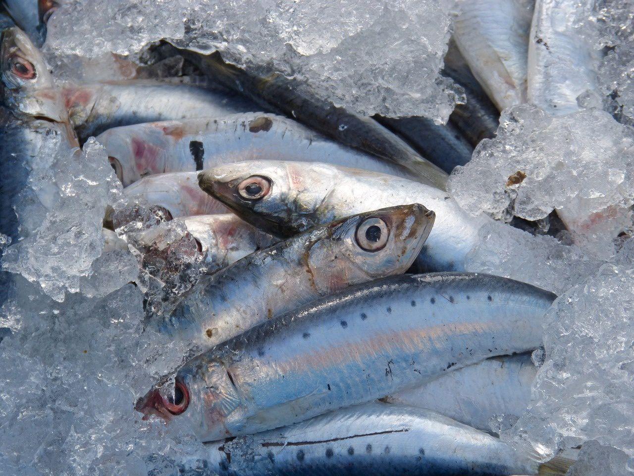 Pêche et aquaculture en France : Les quantités débarquées