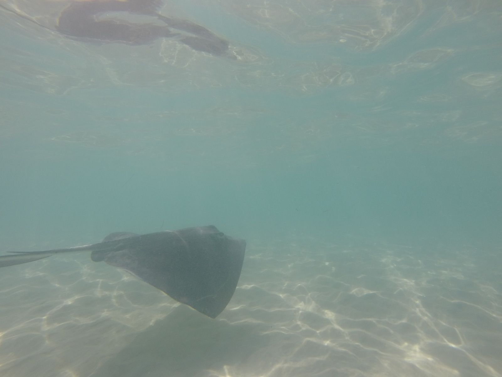 Stingray City !