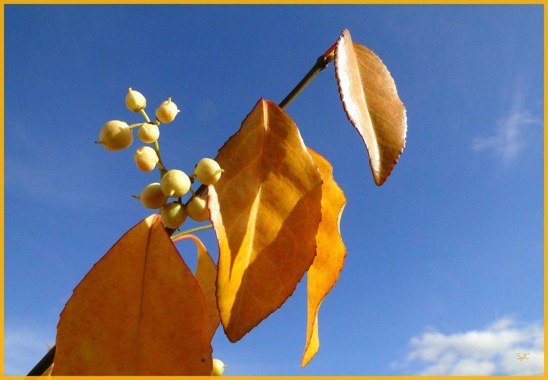 Dernières couleurs d'automne...