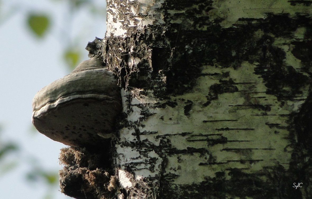 Sur un tronc d'arbre...