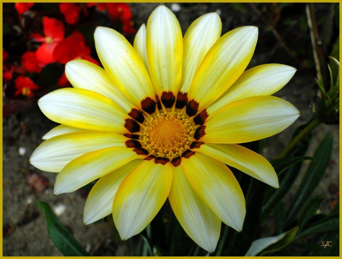 Des fleurs colorées orange et jaune