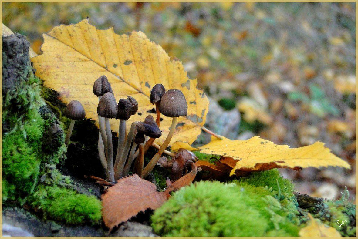 Quelques champignons... beaux mais non cosmestibles !