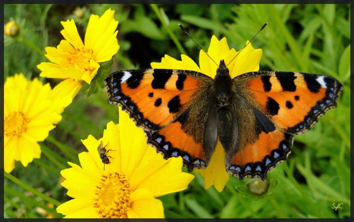 Les papillons ressortent...