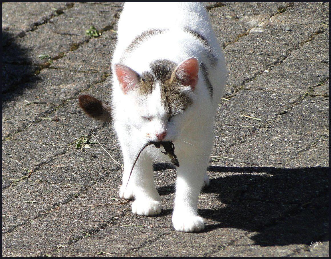 Mon chat... &quot&#x3B;MontBlanc&quot&#x3B;