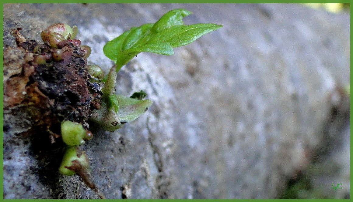 Quelques détails de la végétation...