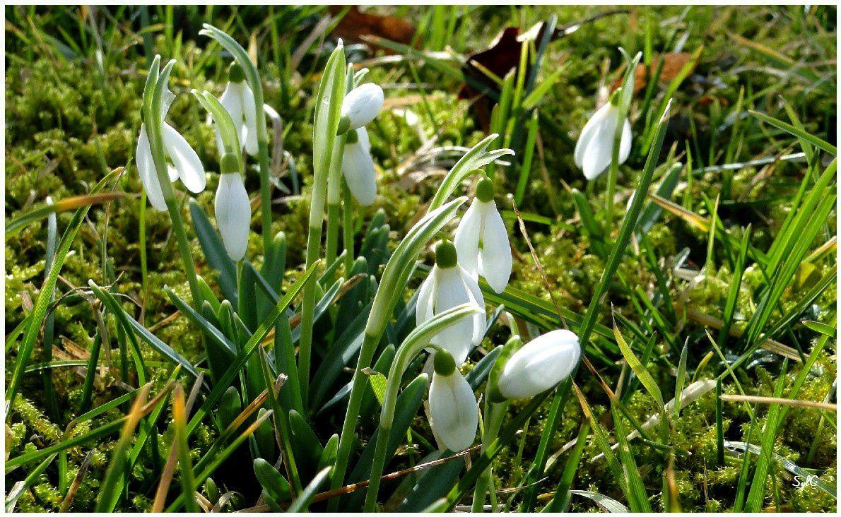 Bourgeons et perce-neige : le printemps est annoncé...