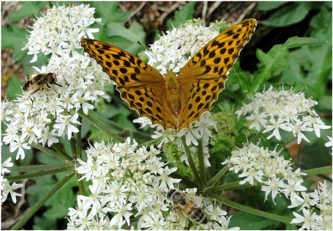 Un papillon en forêt...