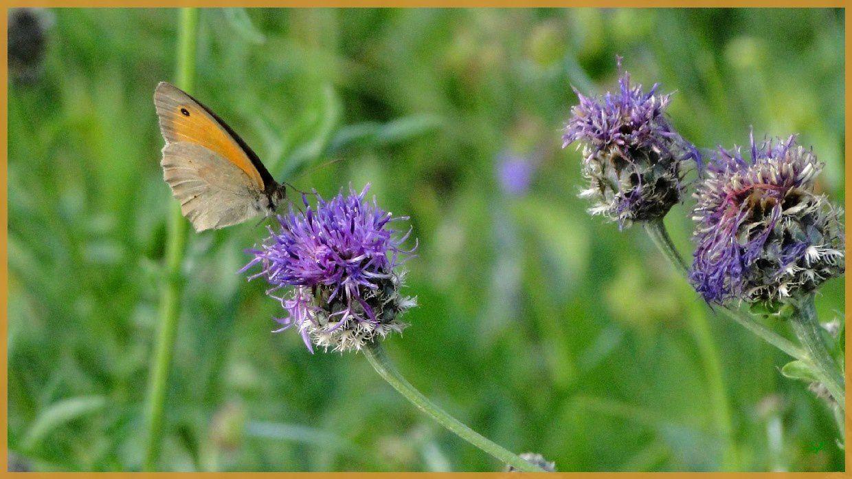 3 papillons...