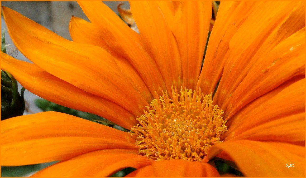 Centre des fleurs - Cœur des fleurs