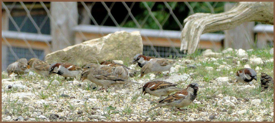 Des oiseaux... au parc de la Garenne en Suisse...