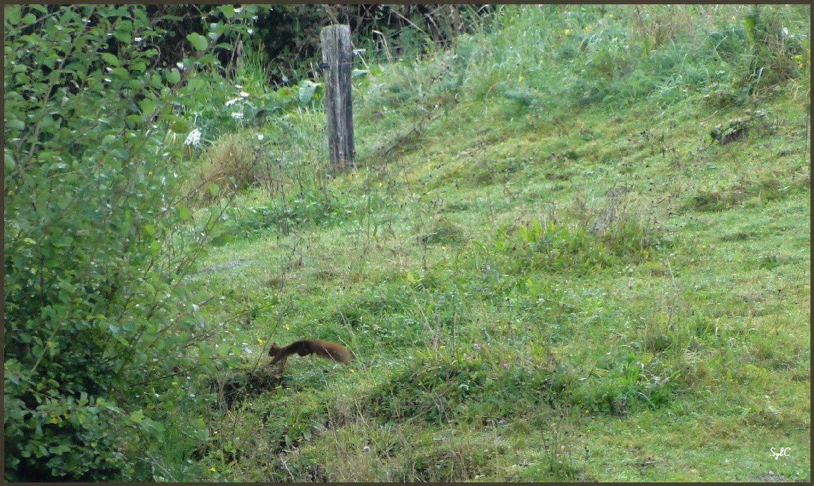 Les sauts de l'écureuil...