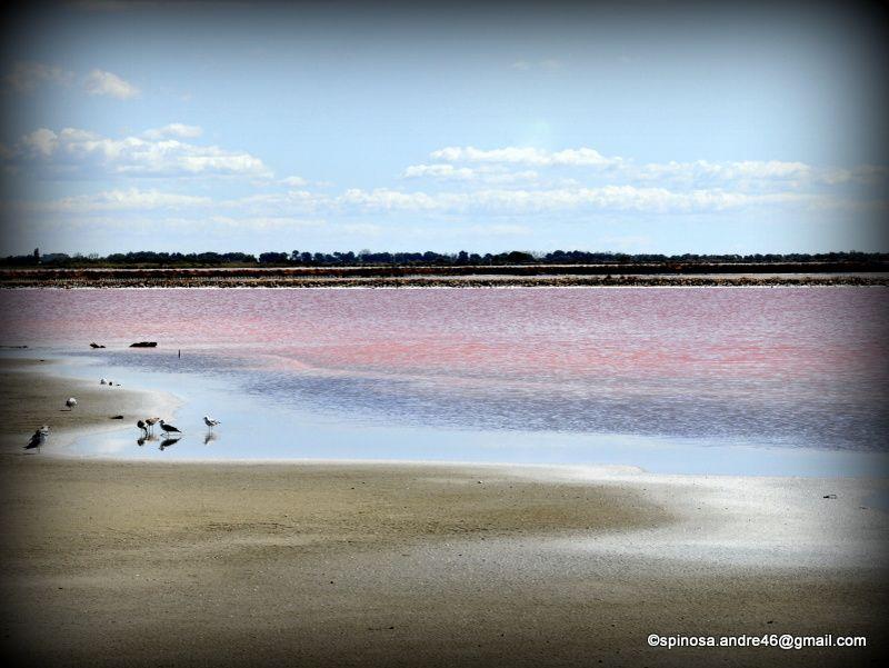 Aigues Mortes et ses salins