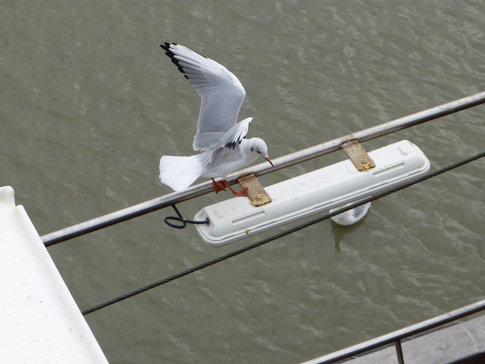 au bonheur des oiseaux....ou la plume libre