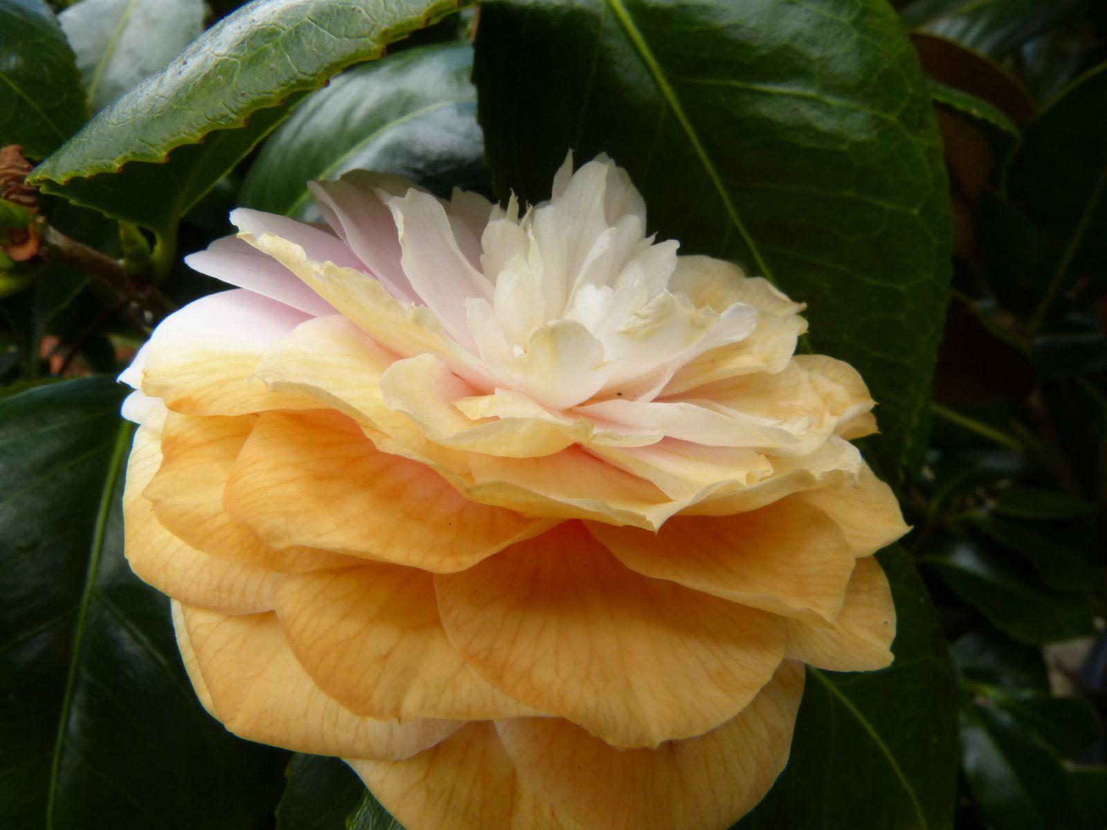 fleurs ou Farrenq /Jardinerie /Place Adamville/ 94100 St Maur des fossés.