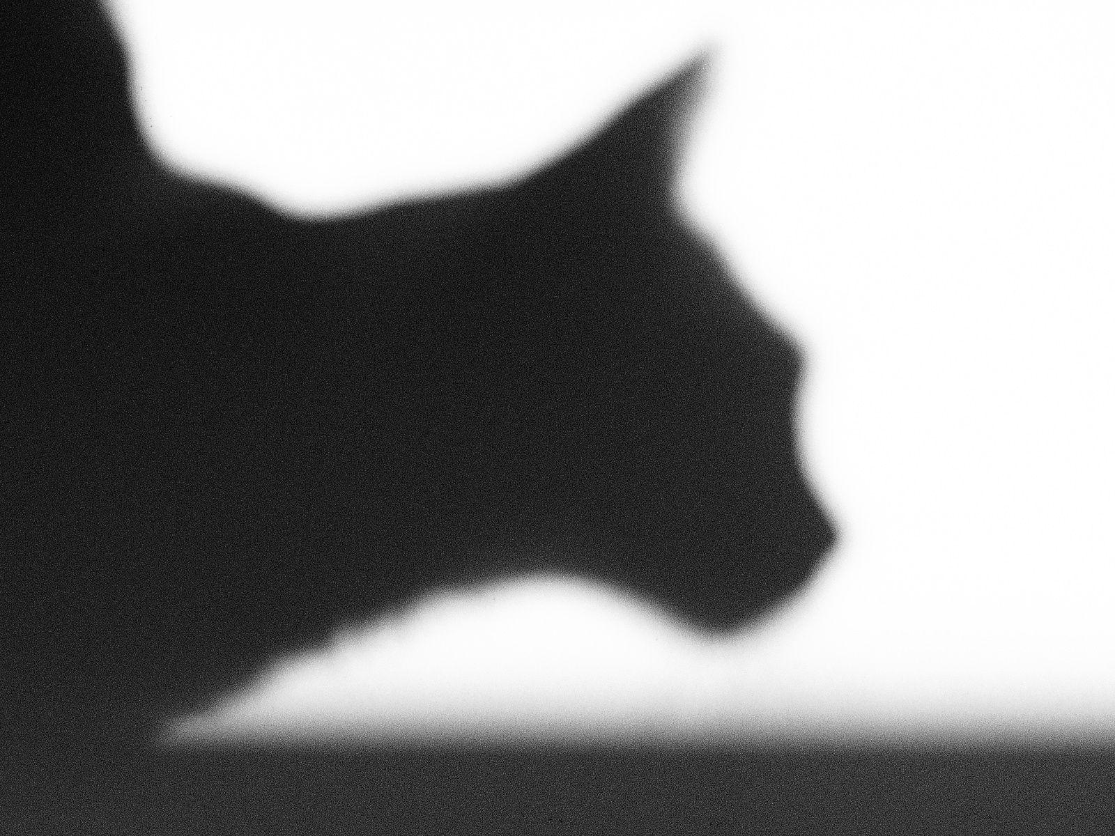"""je soumets à vos commentaires 30 photos """"noir et blanc""""...."""